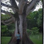 mayaların inanışına göre ceiba ağacı dünyanın aksı oluyor