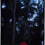 rosmario doğal park alanı
